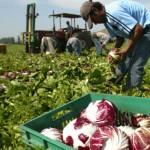 FAO destaca iniciativa de Uruguay que permitirá al Estado comprar 30 % de la producción agraria familiar con destino social
