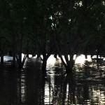 Asciende a 273 la cantidad de personas evacuadas en el norte y litoral del país
