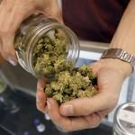 Partido Nacional propone derogar la Ley de legalización de producción y venta de marihuana