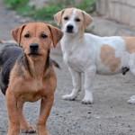 CONAHOBA recibió más de 1.000 denuncias desde la reglamentación de la Ley de Bienestar Animal