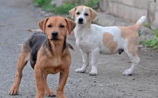Perros callejeros / Foto: Geoff Gallice