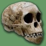 """Refutan al cráneo del """"niño de Taung"""" como humano y cambia idea de la evolución"""