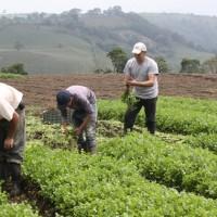 Parlamento analiza proyecto de Ley para fortalecer agricultura familiar y pesca artesanal