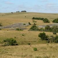 Senado aprueba proyecto de Ley que limita la compra y tenencia de tierra a Estados y empresas extranjeras