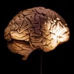 Cerebro artificial desarrollado con copiadora 3D mantenido con vida 9 semanas