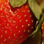 Prueban que las frutillas protegen al estómago ante el alcohol