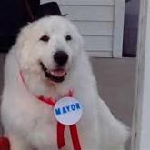 En Cormorant, eligen alcalde a un perro que duplicó votos de su rival humano