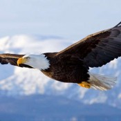 Cambio climático amenaza de extinción a la mitad las aves de Norteamérica