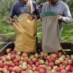 Crítica situación de la granja: Un productor por día abandona al sector