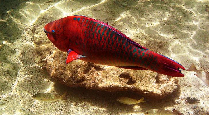 Descubren cómo los peces dejaron solo de nadar para hacerse animales ...