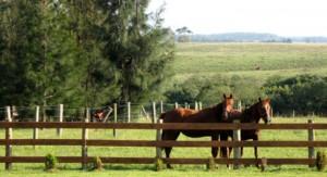 Vázquez anuncia Impuesto de Primaria para grandes productores rurales, y policía rural contra abigeato