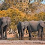 Interpol se suma en África a lucha contra caza furtiva y tráfico ilegal