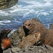 Cientos de focas mueren en las costas de Alemania por epidemia de gripe viral