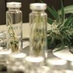 Exitosa prueba clínica en medicamento contra epilepsia