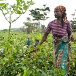 """ONU festeja el Día Internacional de las Mujeres Rurales por """"impulsar el progreso mundial"""""""