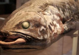 """Los placodermos: los peces que """"inventaron"""" el coito hace 385 millones de años"""