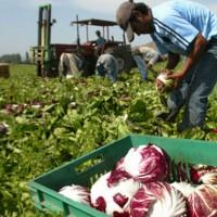 Uruguay produce alimentos para 28 millones de personas y tiene capacidad para cubrir las necesidades de 40 millones