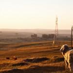 Inauguración de obras de electrificación en Artigas por más de 11 millones de dólares