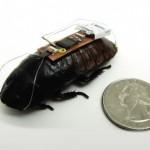 Entrenan cucarachas para búsqueda en zonas de desastres