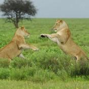 Se multiplica tráfico de fauna protegida en Internet: ya la ofrecen en 300 portales de 16 países