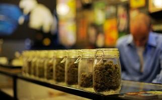 Presentan proyectos de Ley para establecer marco de prevención y educación a uso de cannabis