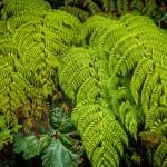 """Las plantas se reconocen por receptores de luz y crecen mejor """"entre parientes"""""""