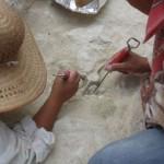"""Descubren """"pollos de granja"""" domesticados hace más de 10.000 mil años"""