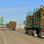 Mujica dijo que tercera planta de celulosa uruguaya compraría madera a Argentina