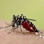 ¿Cómo prevenir la fiebre Chikungunya? Parte 2