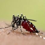 Fiebre Chikungunya. Parte 1
