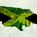 """Parlamento de Jamaica estudia legalizar la marihuana, el """"oro verde"""" de la nación"""