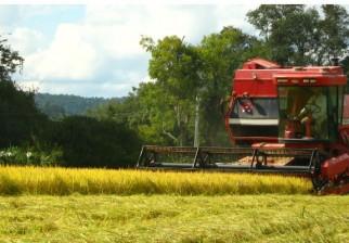 El sector agropecuario recaudó 316 millones de dólares en 2014 debido a una disminución de la presión fiscal