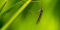 Formas naturales de espantar a los mosquitos