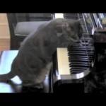 CATcerto: Orquesta sinfónica toca obras musicales improvisadas por un gato