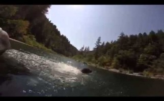 Un perro que bucea a cuatro metros por debajo de la superficie se convierte en favorito de YouTube