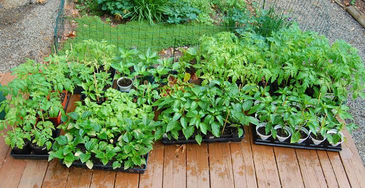 Cultivar vegetales y hierbas aromáticas con poco espacio