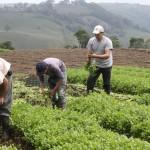 Colonización consolidó estrategia de acceso a la tierra según autoridades