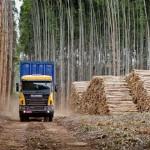 Estiman que la pasta de celulosa será el principal producto de exportación del Uruguay