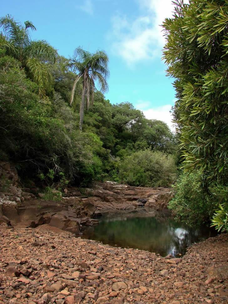 Aprecia las especies de vegetación y fauna autóctonas en el Valle del Lunarejo