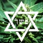 """Comunidad judía de Nueva York estudia producción de marihuana """"kosher"""" para uso medicinal"""