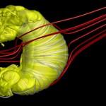 """""""Burbuja"""" que protege el Sistema Solar se parece a un tubo de pasta de dientes"""
