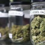 Gobierno autoriza el uso de cannabis para investigación científica y medicinal