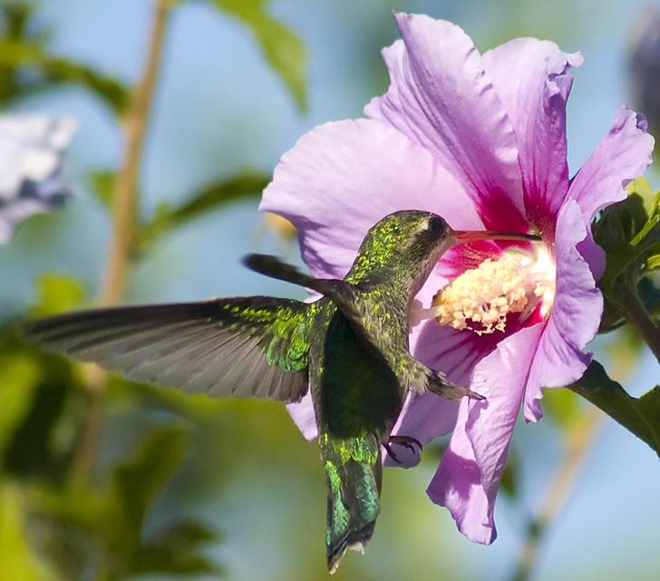 Fotografías pájaros sin asustarlos