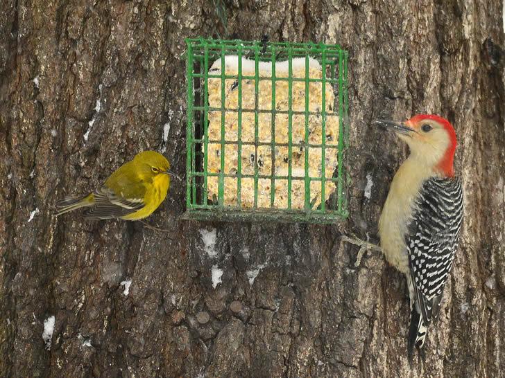 Hacer un comedero para pájaros es muy sencillo