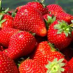 Las frutillas: deliciosas y buenas para la salud