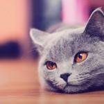 """Un estudio asegura que los gatos domésticos ven cosas """"invisibles"""" para el humano"""