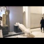 Estado Islámico destruye obras asirias milenarias en museos de Irak pero hay versiones de que las trafican