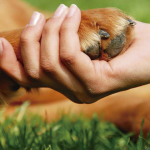 Más motivos para querer a nuestras mascotas