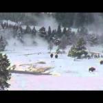 """Aparecen 3 """"Big foot"""" en cámaras web del Parque Yellowstone tras una manada de búfalos: 1 millón de visitas en una hora"""