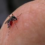 Identifican anticuerpo para detener infección de dengue